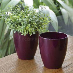 kx_cachepoorchids_violet_30774